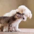 Prise en charge vétérinaire comportementaliste