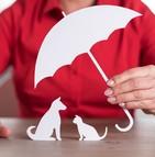 Waggel propose une nouvelle approche de l'assurance pour animal de compagnie
